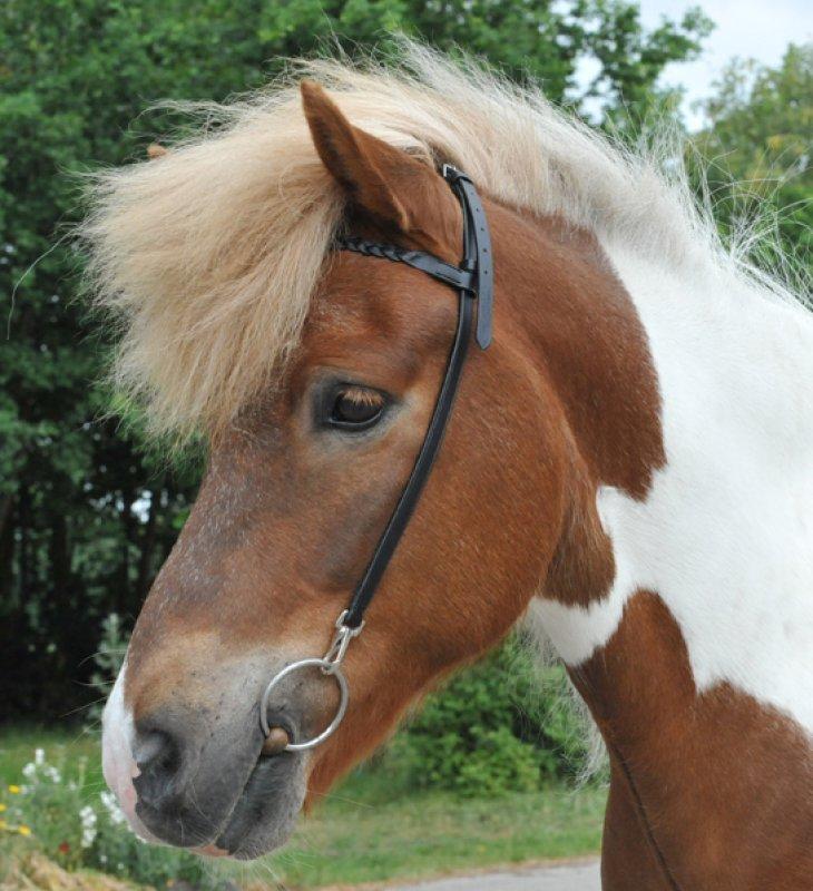 HKM Nackenriemen mit Stirnband für Islandpferde